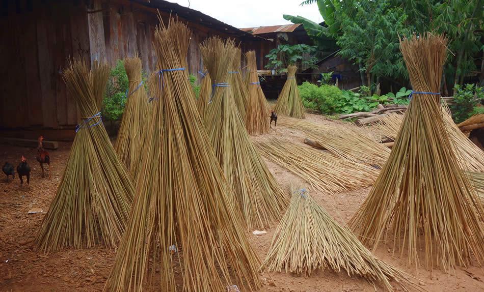 モン(Hmong)族の麻の茎干し風景_織り人(Orijin)